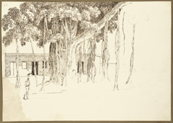 Unfinished sketch of a banyan tree in the grounds of Maharaja Mitrajit Singh's house, Patna (Bihar). 2 May 1825